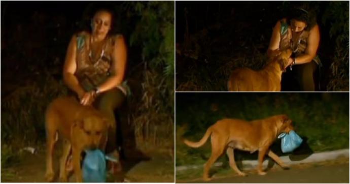 Загадочное исчезновение собаки по вечерам удивляло хозяйку. Она проследила за ней - и открытый секрет растрогал её до глубины души! рис 2