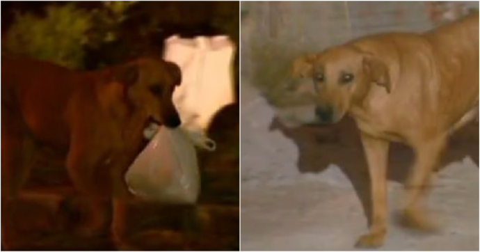 Загадочное исчезновение собаки по вечерам удивляло хозяйку. Она проследила за ней - и открытый секрет растрогал её до глубины души! рис 3