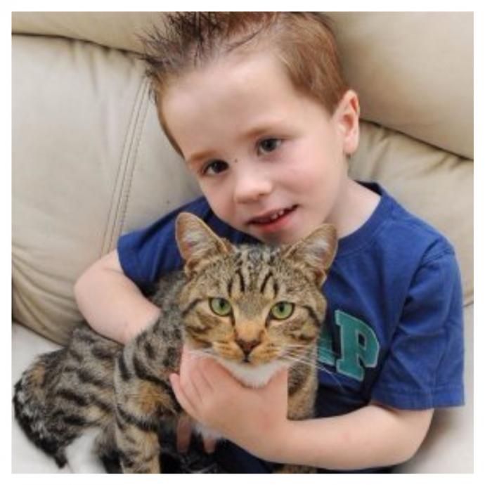 Их было трое, он был один... но с котом! Самый храбрый питомец защитил своего 5-летнего хозяина от нападавших! рис 2