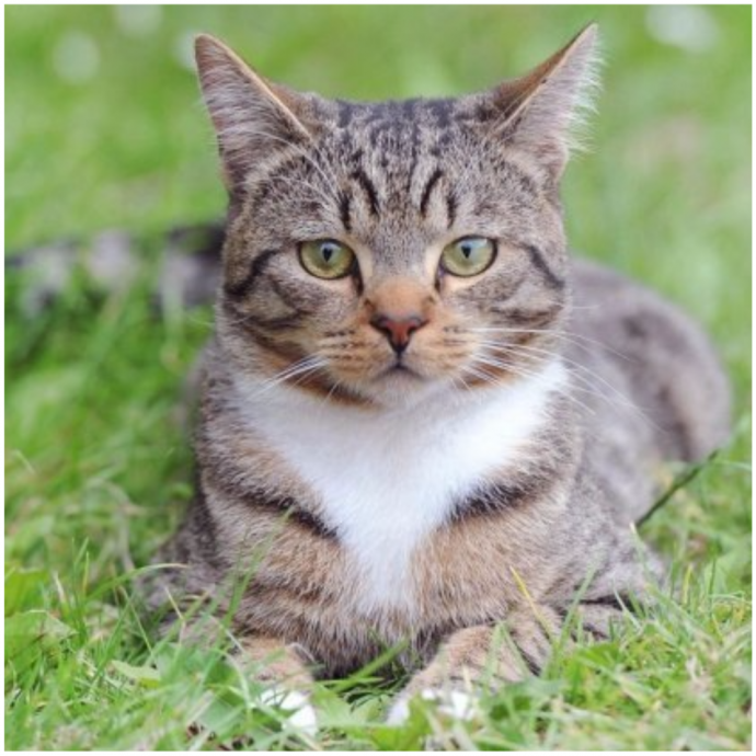 Их было трое, он был один... но с котом! Самый храбрый питомец защитил своего 5-летнего хозяина от нападавших! рис 4