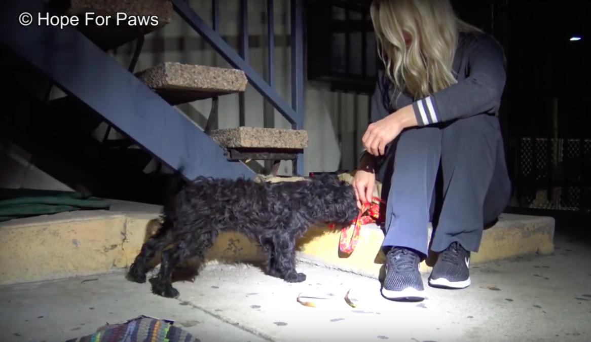 Этот щенок лишился мамы, но нашел отца! Теперь Сильвестр и Спидди счастливы вместе!