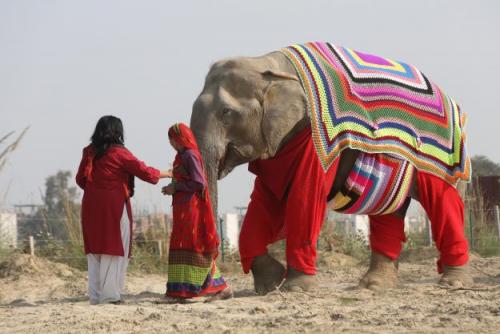 """""""Кому пончо, кому накидку, кому одеялко?"""" В Индии для слонов вяжут свитера и комбинезоны, чтобы помочь им пережить холода! рис 3"""