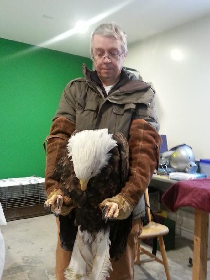 eagleslove01