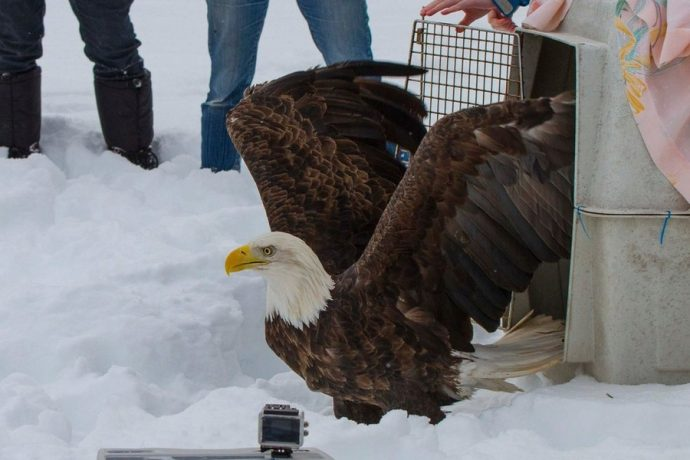 eagleslove04