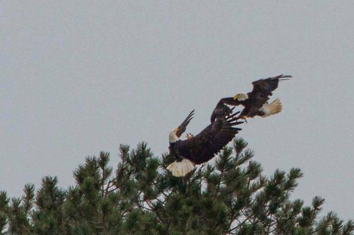 eagleslove07