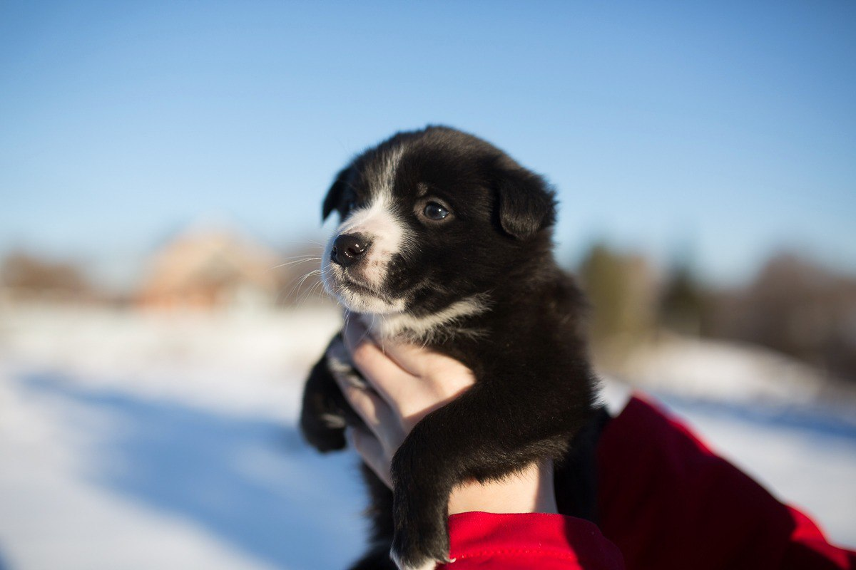 Такой ребёнок - один на миллион! 14-летняя школьница открыла собственный приют для бездомных собак в Башкортостане!