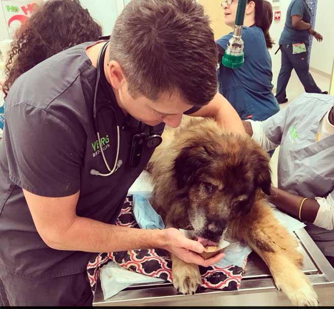 Жизнь... в мусорном пакете! Этот пёс пролежал неделю связанным, без возможности дышать и подать голос... Но он ВЫЖИЛ! рис 2