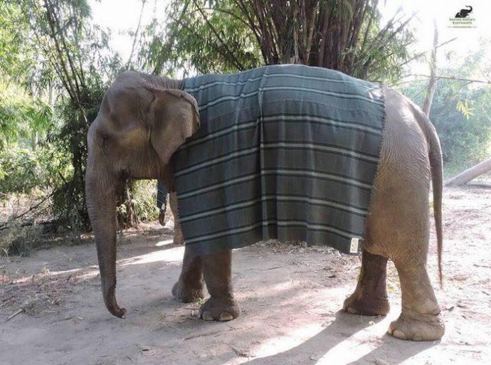 """""""Кому пончо, кому накидку, кому одеялко?"""" В Индии для слонов вяжут свитера и комбинезоны, чтобы помочь им пережить холода! рис 2"""