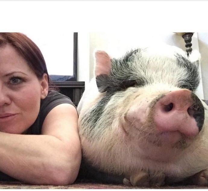 Свин - предводитель собак! Смешной шарик на четырёх копытцах живёт в собственной будке и умеет улыбаться! :) рис 5