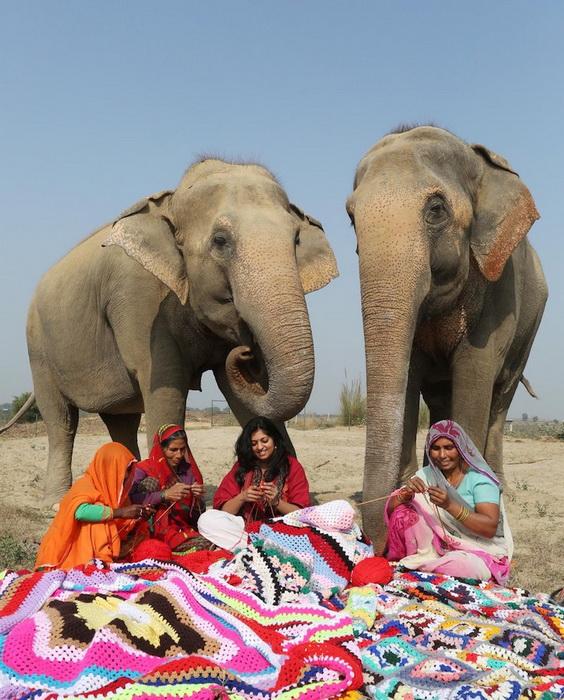 """""""Кому пончо, кому накидку, кому одеялко?"""" В Индии для слонов вяжут свитера и комбинезоны, чтобы помочь им пережить холода!"""