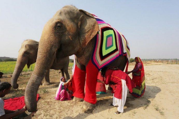 """""""Кому пончо, кому накидку, кому одеялко?"""" В Индии для слонов вяжут свитера и комбинезоны, чтобы помочь им пережить холода! рис 4"""