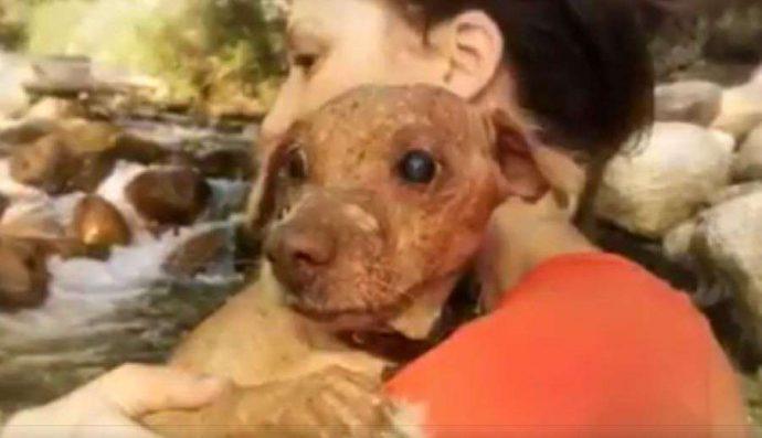 33 несчастья этого пса уже не оставляли надежды... Но врачи вновь вдохнули в него жизнь! рис 9