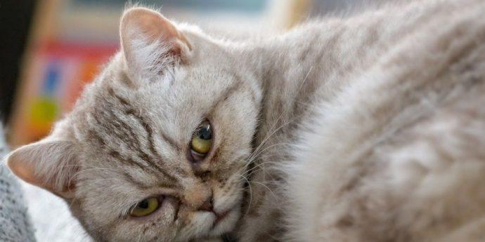 rak-cats