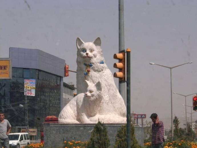 Дикие, но симпатиШные! Водоплавающие кошки турецкого озера Ван живут как хотят: дружат с лисами, купаются и рыбачат! рис 8