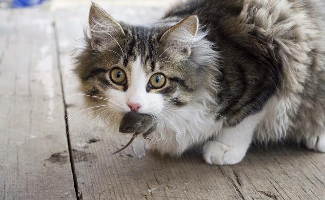 vp_us_cat_bite_iStock_1440835_MEDIUM-666x432