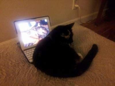 Кот страшно тосковал, когда умер его лучший друг... И теперь он засыпает только с маленьким гаджетом и фотографиями памяти! рис 4