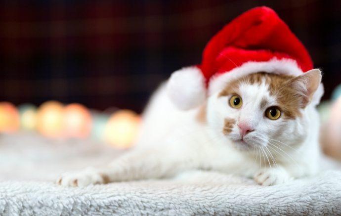 В меру упитанный кот Антошка ищет хозяев! :)