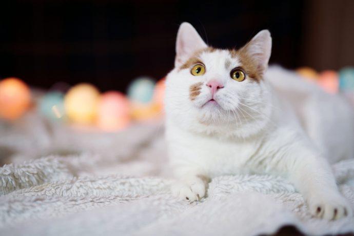 В меру упитанный кот Антошка ищет хозяев! :) рис 2