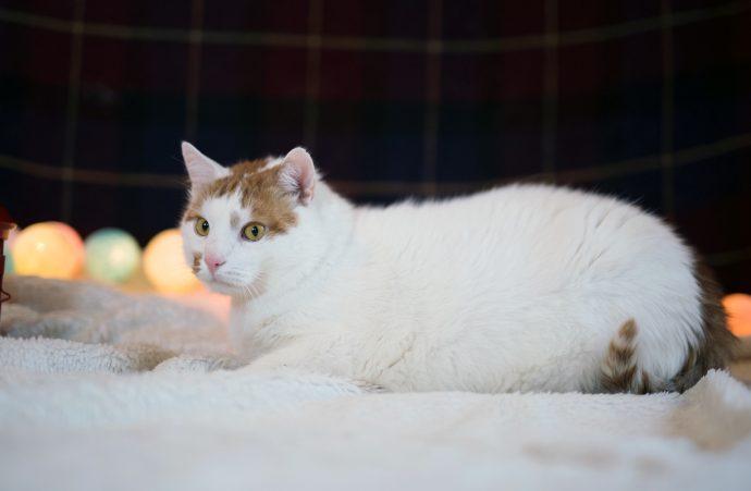 В меру упитанный кот Антошка ищет хозяев! :) рис 3