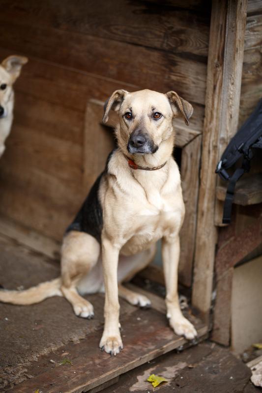 Кареглазая Ася - весёлый дружок, непоседа и самая верная в мире собака! Не ваша ли?