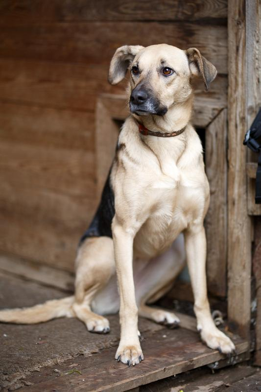 Кареглазая Ася - весёлый дружок, непоседа и самая верная в мире собака! Не ваша ли? рис 4