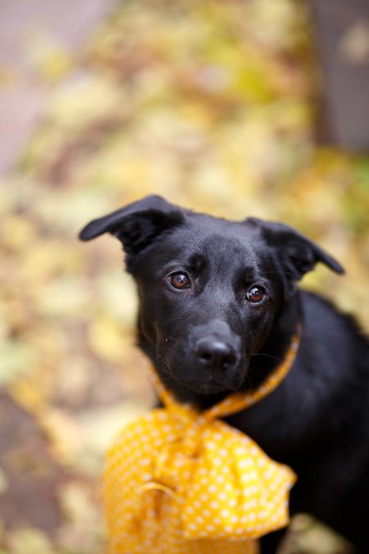 Собачка Бони: добрая юная леди ищет тёплый дом и большое сердце!