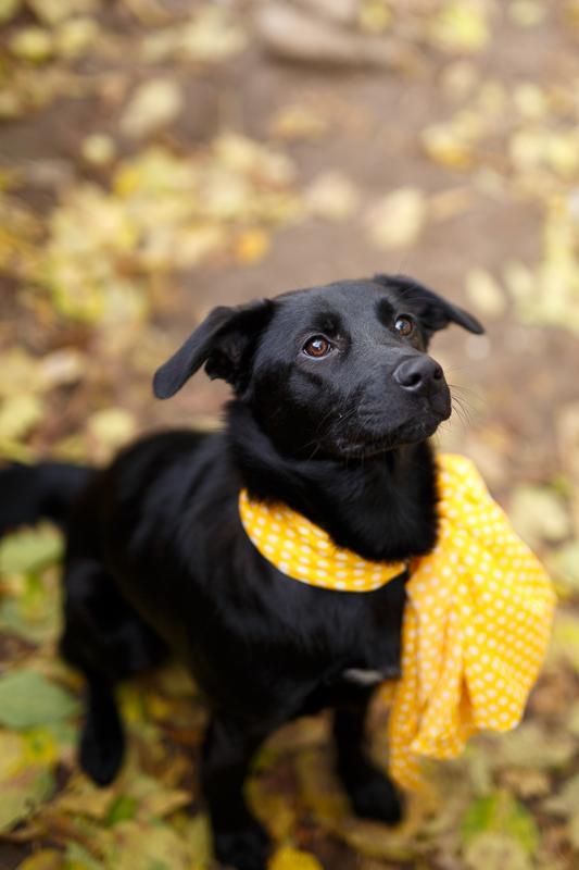 Собачка Бони: добрая юная леди ищет тёплый дом и большое сердце! рис 2