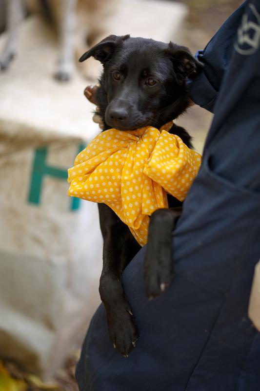 Собачка Бони: добрая юная леди ищет тёплый дом и большое сердце! рис 3