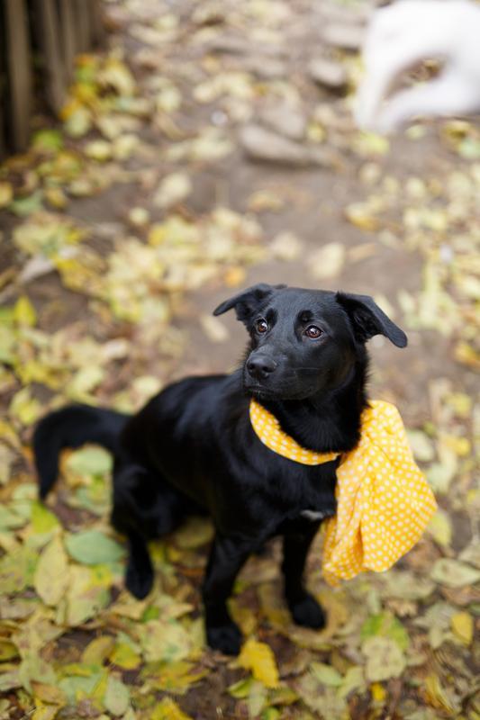 Собачка Бони: добрая юная леди ищет тёплый дом и большое сердце! рис 4