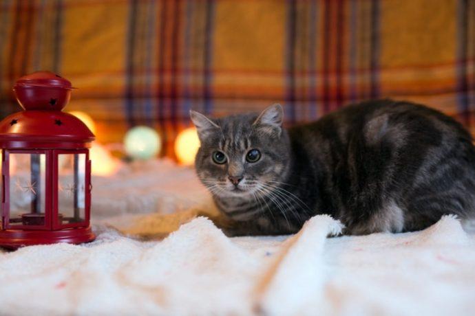 Кошка Лилия - плюшевый антидепрессант! Кому позитивчик? :)
