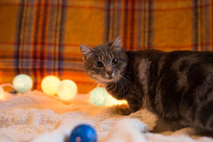 Кошка Лилия - плюшевый антидепрессант! Кому позитивчик? :) рис 2