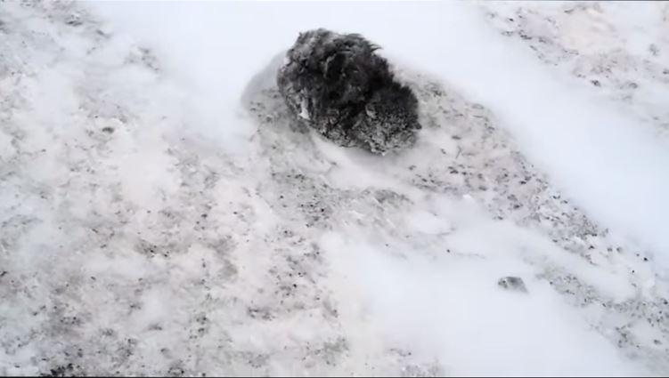 """Парень спас замерзающую кошку, которая почти превратилась в лёд! Осталось только маленькое """"но""""... рис 2"""