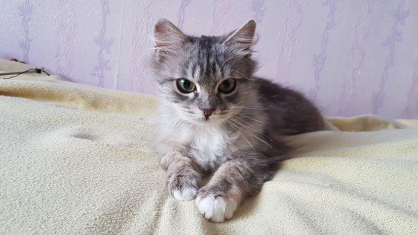 """Парень спас замерзающую кошку, которая почти превратилась в лёд! Осталось только маленькое """"но""""... рис 4"""