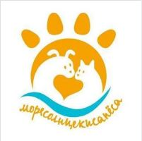 Помощь бездомным животным