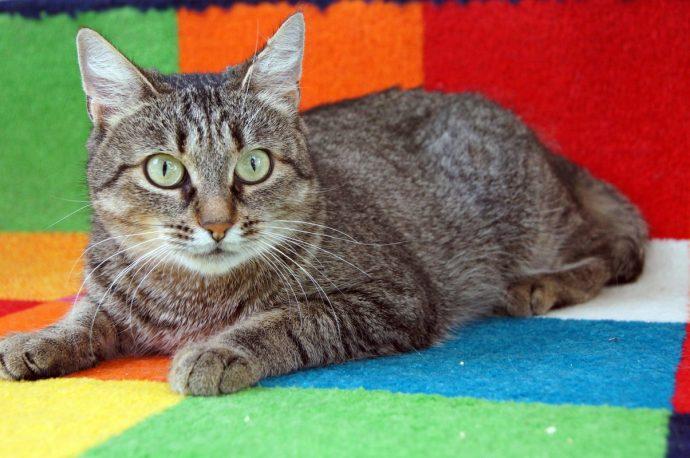 Лесная, но воспитанная! Кошка Стефания часто сидит у окна, выглядывая кого-то очень долгожданного... рис 4