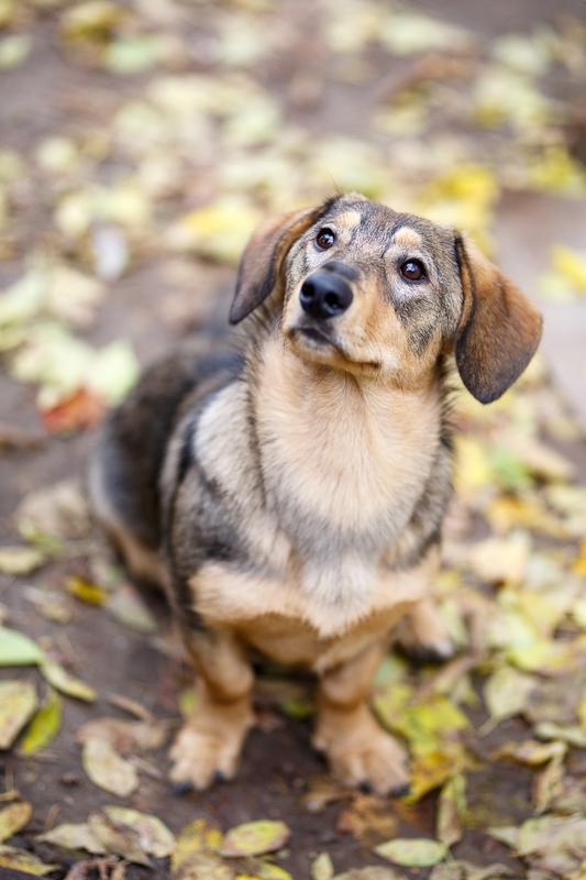 Знакомьтесь, Топик: сладкий, ласковый пёс, который вместе с вами хочет радоваться жизни! рис 2