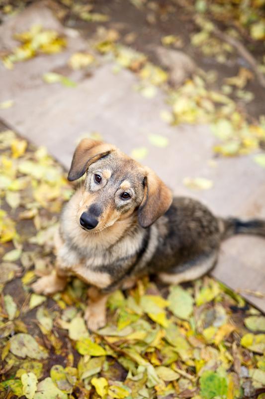 Знакомьтесь, Топик: сладкий, ласковый пёс, который вместе с вами хочет радоваться жизни! рис 3