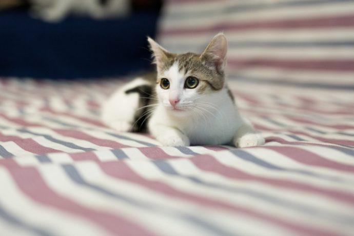 Изящная девочка Тута мечтает о тёплых коленях... Возьмите котёнка себе в друзья!)