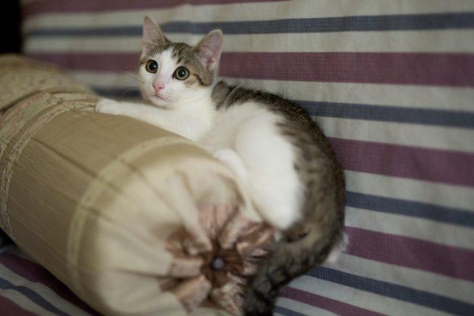Изящная девочка Тута мечтает о тёплых коленях... Возьмите котёнка себе в друзья!) рис 2