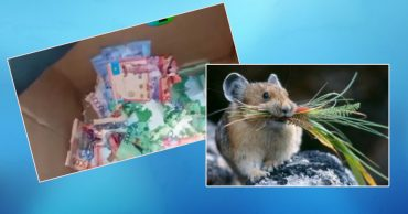 миниатюра мышка