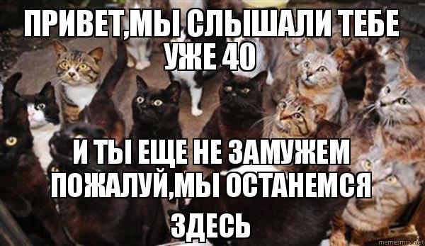 """«Я построю гарем на четыреста мест…» Будни кошатницы: Швепс, Одри и ночной """"тыгидык!"""""""