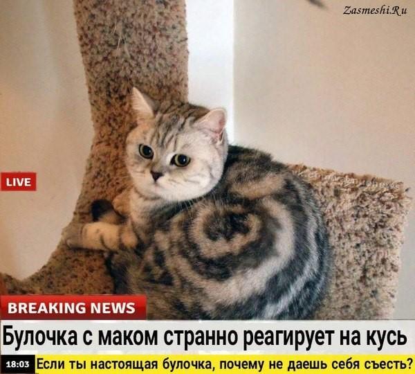 Поцелуи в животик: Лиля, Антон и общие правила кошачьих нежностей! рис 2