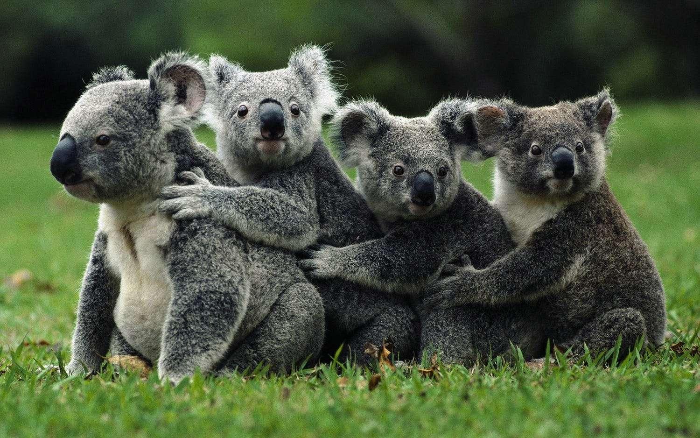 самые лучшие картинки животных показать постепенно