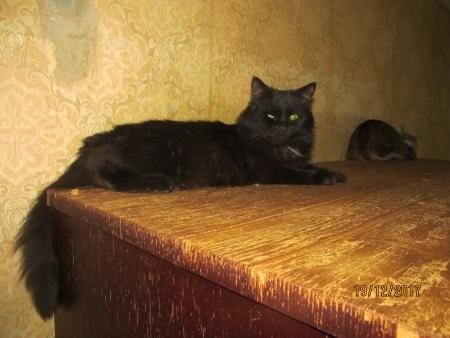 Калуга: квартиранты этой квартиры - 38 котов! Все они заперты в одной комнате, волонтёры в отчаянии... рис 2