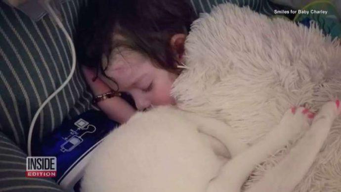 Ангел Чарли: возвращение! Эта кошка была лучшим другом слепой 4-летней девочки... Но вдруг она пропала! рис 4