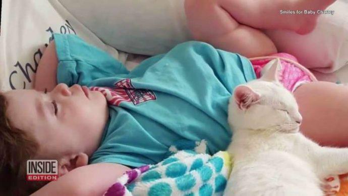Ангел Чарли: возвращение! Эта кошка была лучшим другом слепой 4-летней девочки... Но вдруг она пропала! рис 5