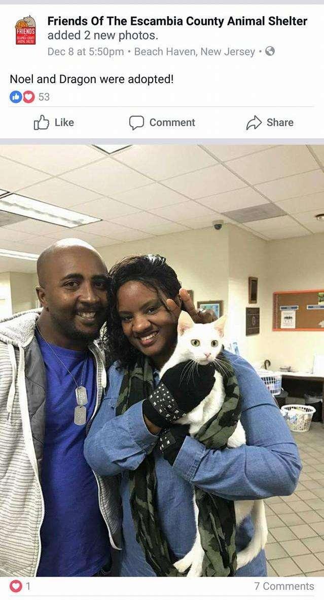 Ангел Чарли: возвращение! Эта кошка была лучшим другом слепой 4-летней девочки... Но вдруг она пропала! рис 6