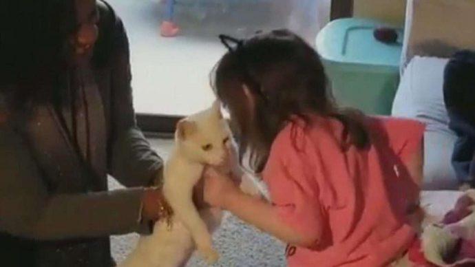 Ангел Чарли: возвращение! Эта кошка была лучшим другом слепой 4-летней девочки... Но вдруг она пропала! рис 7