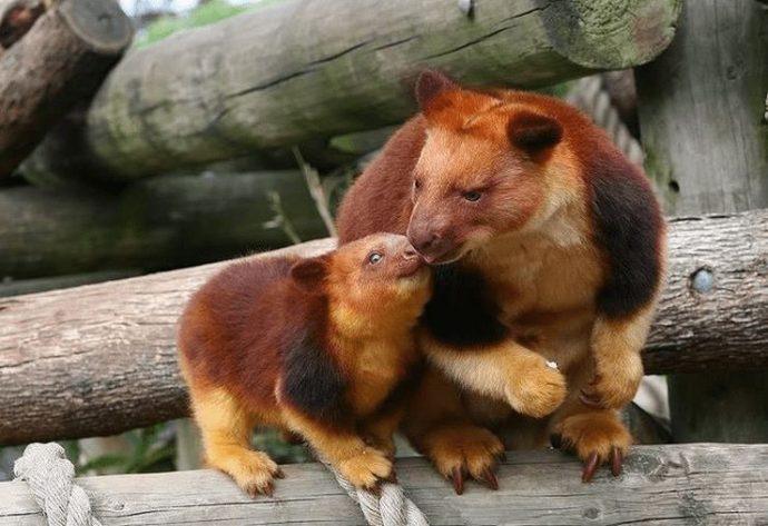 15 самых восхитительных животных, которых природа создавала в хорошем настроении :)