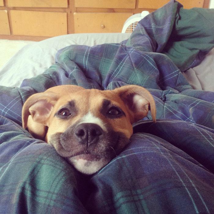 13-happy-dogs
